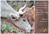 "Postkarte ""Herz!"" - Zitat Alphonse de Lamartine"