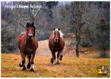 "Postkarte ""Pferde"" - respektiere leben"