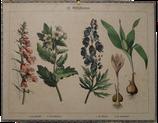 Giftpflanzen