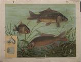 Fische II