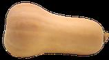 Butternuss Kürbis ca. 1-,5 kg