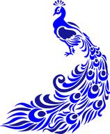 Blue Peacock de l'ile de Sumatra (Indonésie)