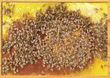 Kit photos pour ruche pédagogique