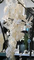Lunariablätter weiß gebleicht 5 Stiele