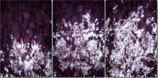 Bewegte Tegernsee Sterne // Triptychon // 2014