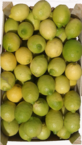 Limoni Siciliani in OFFERTA
