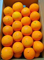 SUPER OFFERTA 29 KG di Arance Siciliane Fioroni coltivate a Ribera