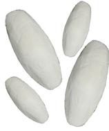 Sepia Schale Xl 18 - 20 cm