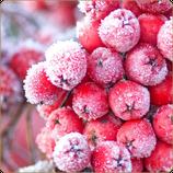 Dark Burner`s Premium Liquid Line - Red Frosty Fruit 50ml / 0mg Nikotin