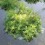 Teichinsel Halbrund 121 cm bepflanzt