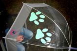 Regenschirm - Pfote MINTGRÜN
