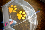 Regenschirm - Pfote MANDARINE