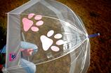 Regenschirm - Pfote LACHSFARBEND