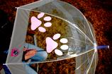 Regenschirm - Pfote BONBONROSA