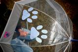Regenschirm - Pfote HIMMELBLAU