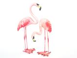 Flamingos - Klein