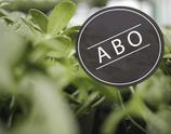 Bio Sonnenblumen-Sprossengrün, 8-Wochen-Abo
