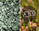 Bio Sprossengrün MIX, Sonnenblume & Erbse, 8-Wochen-Abo