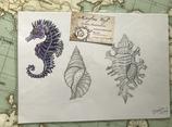 "Dessin original ""hippocampes et coquillages"""