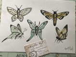 "Dessin original ""papillons"""