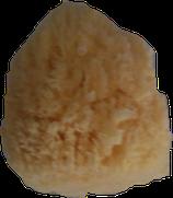 Éponge blanchie qualité courante origine Caraïbes