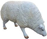 RIZD52 Schaf Figur groß frisst