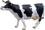 RIA124B Kuh Figur lebensgroß schwarz weiß rechts
