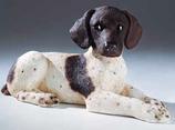RIF344 Pointer Welpe Hund Figur