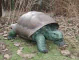 131010 Landschildkröte Figur lebensgroß