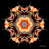 Mandala ''Hagebutte''