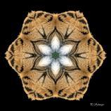 Mandala ''Tigerfell''