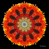 Mandala ''Sonnenblume''