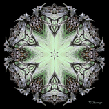 Mandala ''Baumschild''