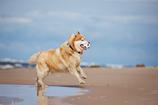 BARFplan *Weight Care* (übergewichtiger Hund)