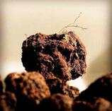 Truffe fraîche uncinatum (dite de Bourgogne)