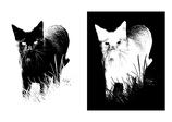 Schwarz-Weiß Bild mit Freistellung