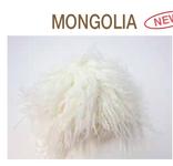 mongolia (barba) renkalik