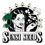 Skunk Kush  - Sensi Seeds