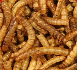 Meelwormen gedroogd