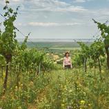 Weinverkostung im Weingut Birgit Braunstein