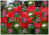 Geschenkpapier Blüten