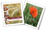 2 livres - Atire d'Elles de la terre à la table et une ode à la vie rurale