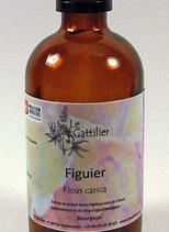 Alcoolature Figuier