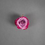 Blume Rose klein lila/pink