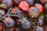 Blue berry (tomate cerise bleu)