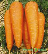 Морковь МОСКОВСКАЯ ЗИМНЯЯ 5
