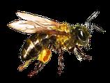 """Schatzkammer der Bienen"" - VIP Patenschaft"