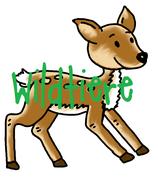 Wildtiere - Bilder