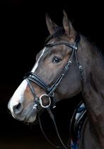 """Zaum """"Vichy"""" von Harrys Horse"""