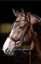 """Zaum """"Release"""" von Harrys Horse"""